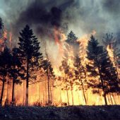 FederlegnoArredo e Assocarta insieme per la ricostruzione dei boschi italiani distrutti dagli incendi