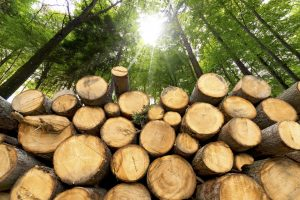 "[:it]Conferenza ""Wood modification in Europe: processes, products, applications""[:en]Meeting ""Wood modification in Europe: processes, products, applications""[:] @ Firenze"
