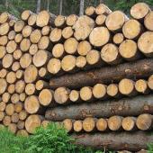 """Mercato del legno: uno sguardo """"fuori da noi""""..."""