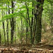 """Industria forestale europea unita per economia """"green"""""""