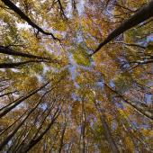 Rapporto Ersaf: stato delle foreste in Lombardia