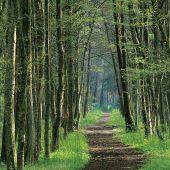 Cei-Bois: rientra la federazione delle industrie forestali lettoni